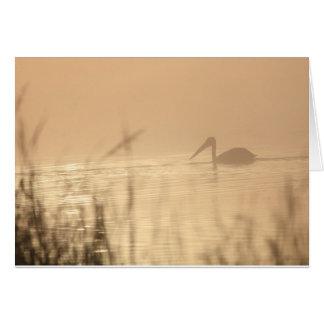 Pelican Sunrise Card
