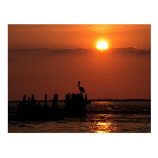 Pelican Sunset Postcard