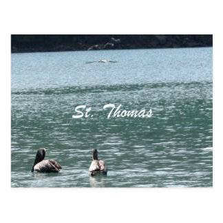 Pelicans at St. Thomas Postcard