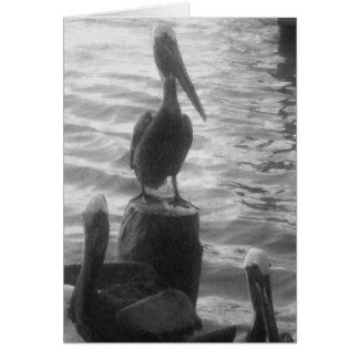 Pelicans Card