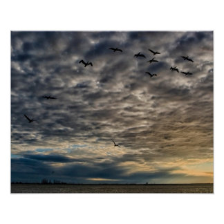 Pelicans in a Stormy sky Poster