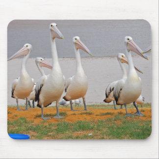 Pelicans in Kalbarri, Western Australia Mousepads