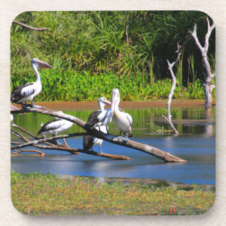 Pelicans in wetlands, Outback Australia Coaster