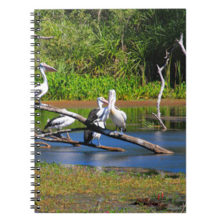 Pelicans in wetlands, Outback Australia Notebooks