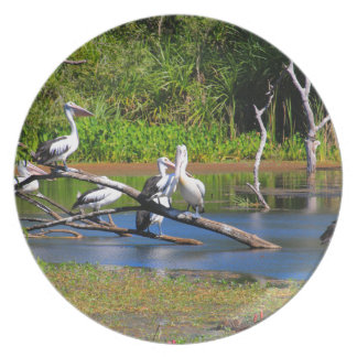 Pelicans in wetlands, Outback Australia Plate