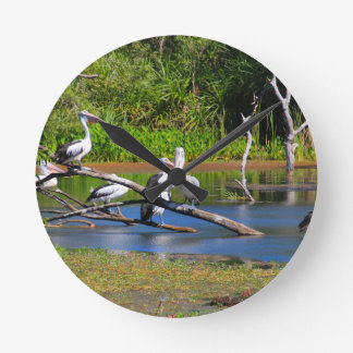 Pelicans in wetlands, Outback Australia Round Clock