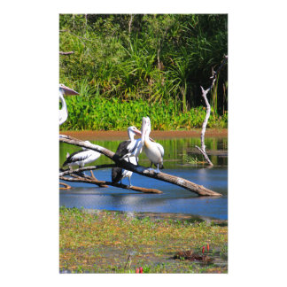 Pelicans in wetlands, Outback Australia Stationery