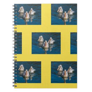 Pelicans notebook
