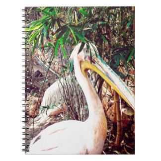 pelicans notebooks