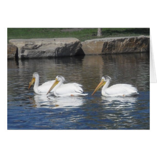 Pelicans Notecards Card