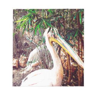 pelicans notepad