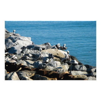 Pelicans on the Rocks Stationery