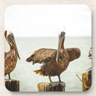 Pelicans perched on posts coaster