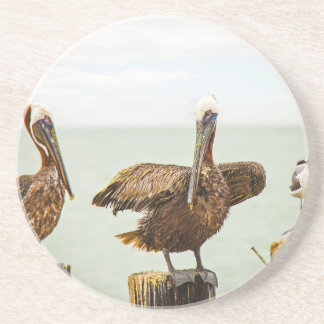 Pelicans perched on posts drink coaster