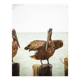 Pelicans perched on posts letterhead