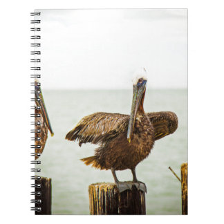 Pelicans perched on posts notebook