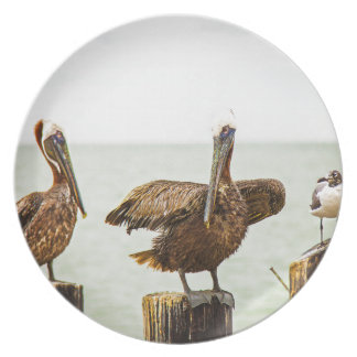 Pelicans perched on posts plate