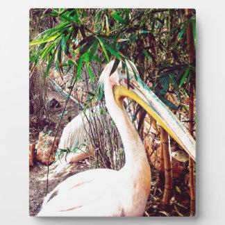 pelicans plaque