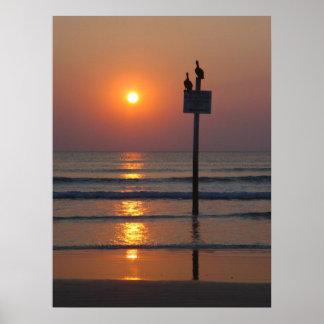 Pelicans Sunrise Ocean Daytona Beach FL Poster
