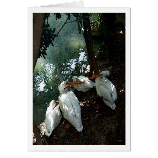 Pelicans Talking 1 -  Water color - Greeting Card