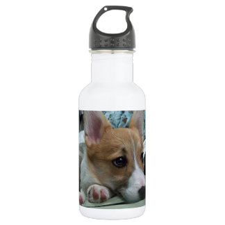 pembroke welsh corgi puppy 2 532 ml water bottle