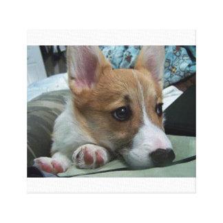 pembroke welsh corgi puppy 2 canvas print