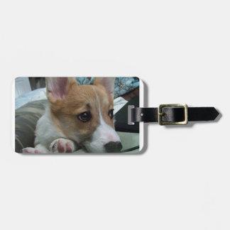 pembroke welsh corgi puppy 2 luggage tag