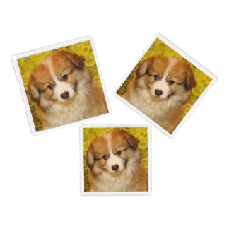 Pembroke welsh corgi puppy acrylic tray