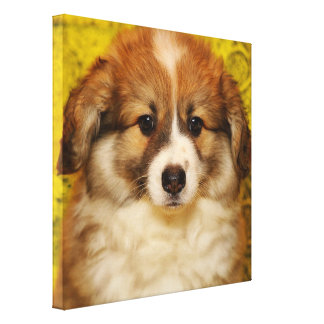 Pembroke welsh corgi puppy canvas print
