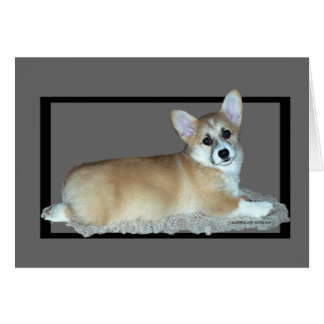 Pembroke Welsh Corgi Puppy Card