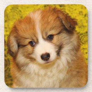 Pembroke welsh corgi puppy coaster