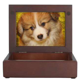 Pembroke welsh corgi puppy keepsake box