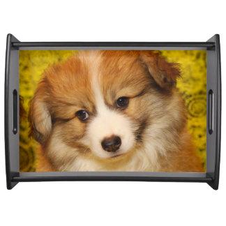 Pembroke welsh corgi puppy serving tray