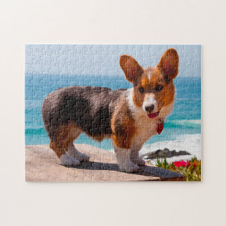 Pembroke Welsh Corgi puppy standing on table Jigsaw Puzzle
