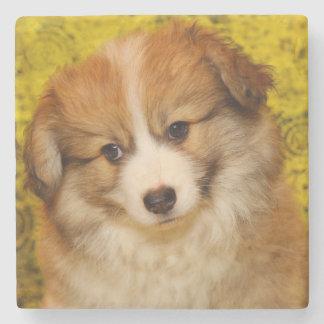 Pembroke welsh corgi puppy stone coaster