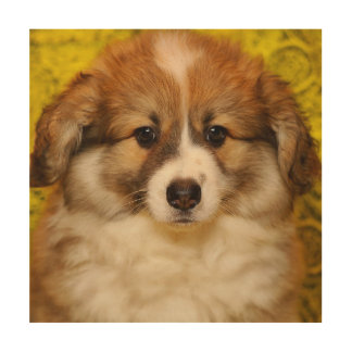 Pembroke welsh corgi puppy wood print