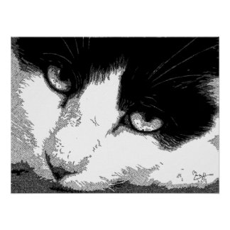 Pen and Ink Cat Poster