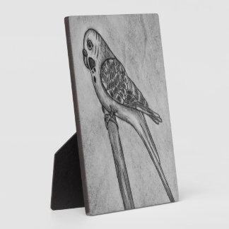 Pencil Drawing of Parakeet Sitting on Stick Perch Plaque