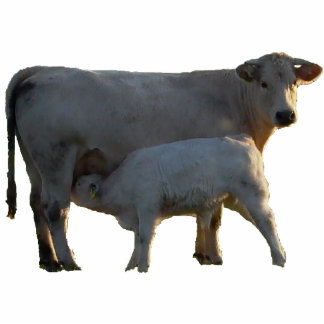 Pendant cow and calf photo sculpture ornament