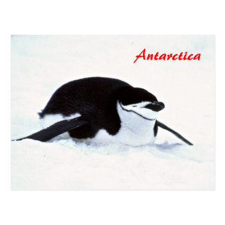 Penguin Antarctica postcard