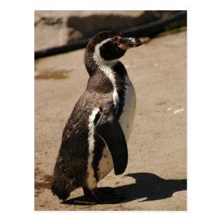 Penguin at Blairdrummond Postcard
