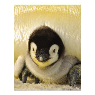 Penguin Baby Antarctic Life Animal Emperor Cute Letterhead