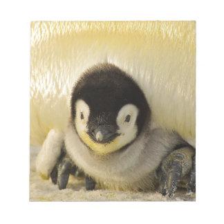 Penguin Baby Antarctic Life Animal Emperor Cute Notepad
