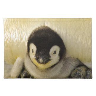 Penguin Baby Antarctic Life Animal Emperor Cute Placemat