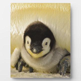 Penguin Baby Antarctic Life Animal Emperor Cute Plaque
