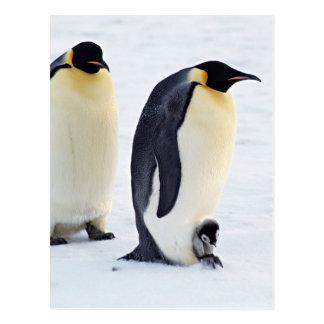 Penguin Bird Animal Ice Frozen Winter Postcard