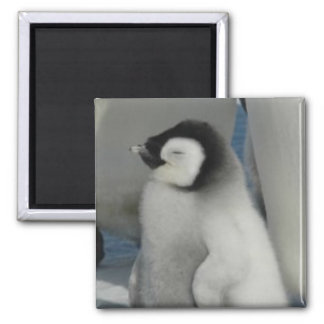 Penguin Chick Square Magnet