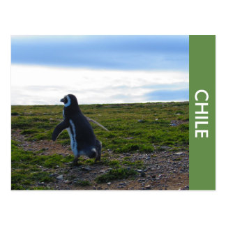 Penguin Chile Postcard
