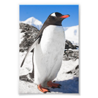 Penguin Closeup Art Photo