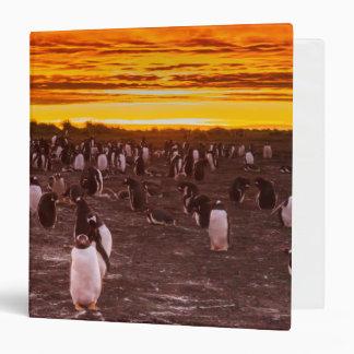 Penguin colony at sunset, Falkland 3 Ring Binder